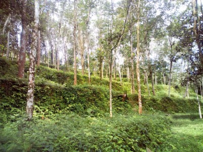 5.14 Acre Rubber plantation for sale near Marangattupilly, Kottayam