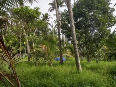 Prime Commercial Land suitable for Resort/Homestay for sale near Marari Beach, Alappuzha