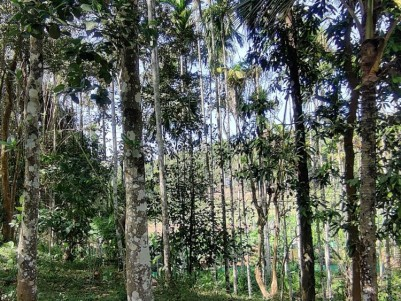 9 ACRES @ 2.5KM FROM KENICHIRA FOR 25 LAKHS PER ACRE (Available in full or part)