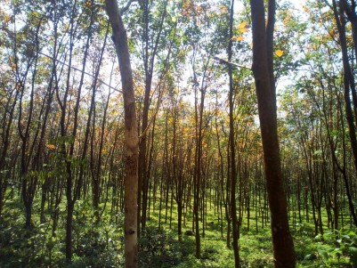 22 Acre Residential land for sale near Karimkunnam, Thodupuzha, Idukki