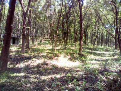 7 Acre Residential land for sale near Pinnakkanadu, Kottayam