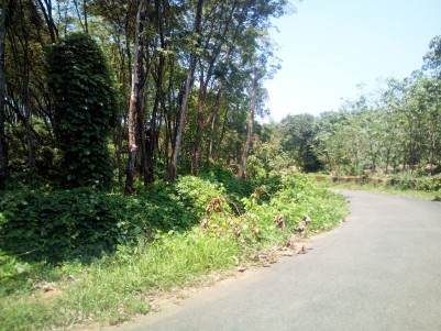 10.5 Acre Residential land for sale near Anakkallu, Kanjirappally, Kottayam