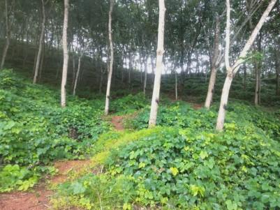 13 Acres of Rubber Plantation For Sale at Perla,Kasargod