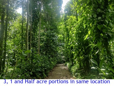 1 ACRE TO 4.5 ACRES  HIGH YIELDING AGRICULTURE LAND NEAR KALLODY, WAYANAD