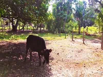 12 Cents of Square plot for sale Near Chingoli (Krishnendhu) Ayurvedha Hospital, Alappuzha