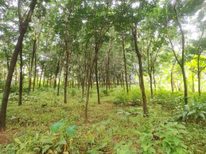 70 Cents of Rubber Plantation for sale at Karukachal, Kottayam