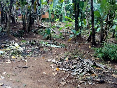 40 Cents Land with Old House for sale at Kulanada, Pathanamthitta