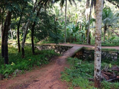 1.25 Acres of Rubber plantation for sale at Kachani, Bhagavathipuram, Trivandrum