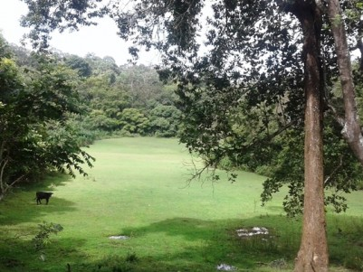 1.5 Acre of Forest Boundary Plot for sale at Kappikkunnu, Pulpally, Wayanad